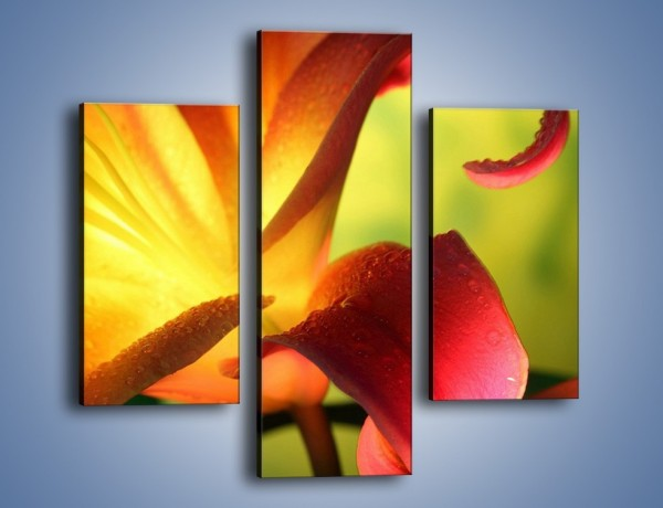 Obraz na płótnie – Rozwinięta lilia w kolorze słońca – trzyczęściowy K054W3