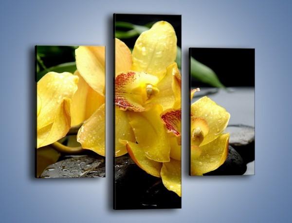 Obraz na płótnie – Żółte storczyki na kamieniach – trzyczęściowy K063W3