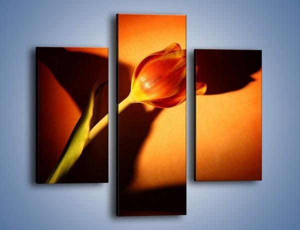 Obraz na płótnie – Tulipan w cieniu – trzyczęściowy K064W3