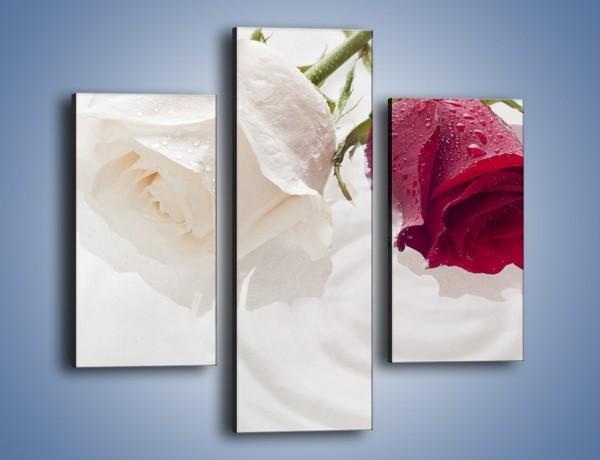 Obraz na płótnie – Róża biała czy czerwona – trzyczęściowy K077W3