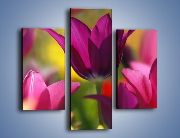Obraz na płótnie – Tulipan w słonecznej oprawie – trzyczęściowy K078W3