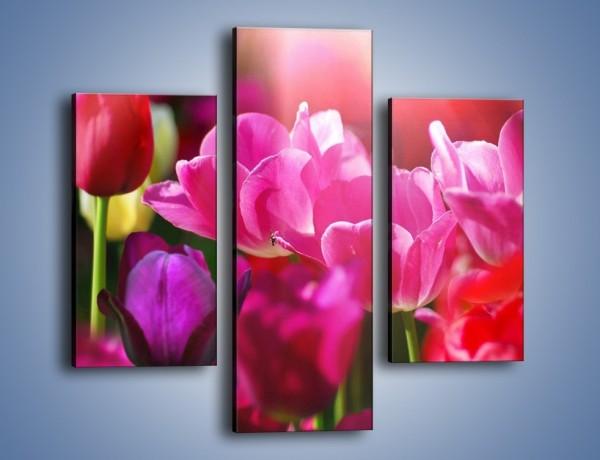 Obraz na płótnie – Tulipany w promieniach słońca – trzyczęściowy K080W3