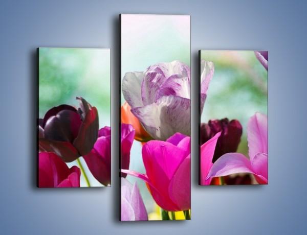 Obraz na płótnie – Tulipany o poranku – trzyczęściowy K081W3