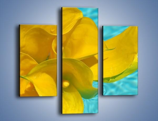 Obraz na płótnie – Żółte kalie na wodzie – trzyczęściowy K082W3