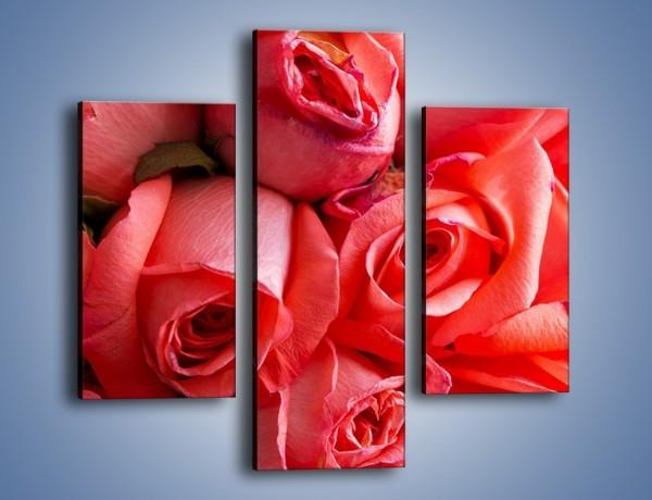 Obraz na płótnie – Tylko widoczne róże – trzyczęściowy K1004W3