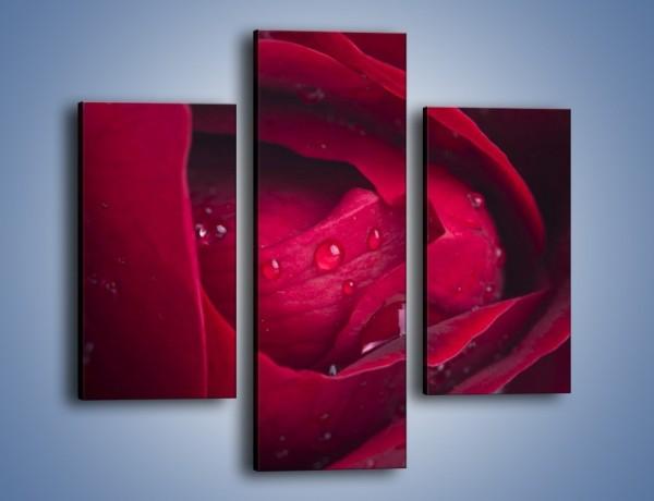 Obraz na płótnie – Ukryte myśli róży – trzyczęściowy K1018W3