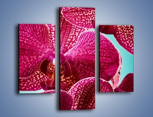 Obraz na płótnie – Płaty kwiatów i niebieskie tło – trzyczęściowy K1019W3