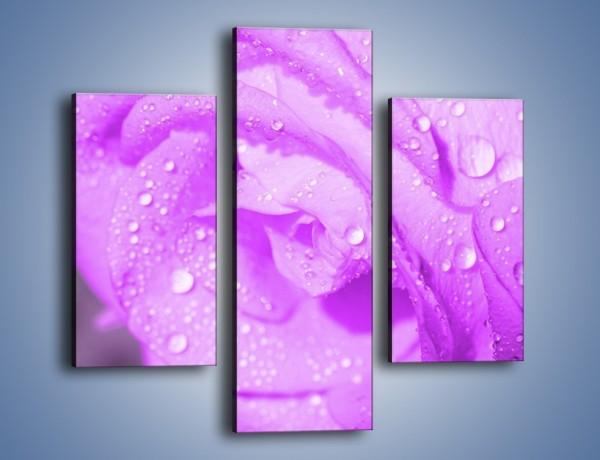 Obraz na płótnie – Jasno fioletowe skropione płatki – trzyczęściowy K1020W3