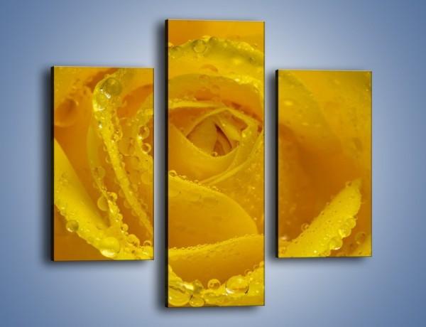 Obraz na płótnie – Zmoczone brzegi płatków – trzyczęściowy K1022W3