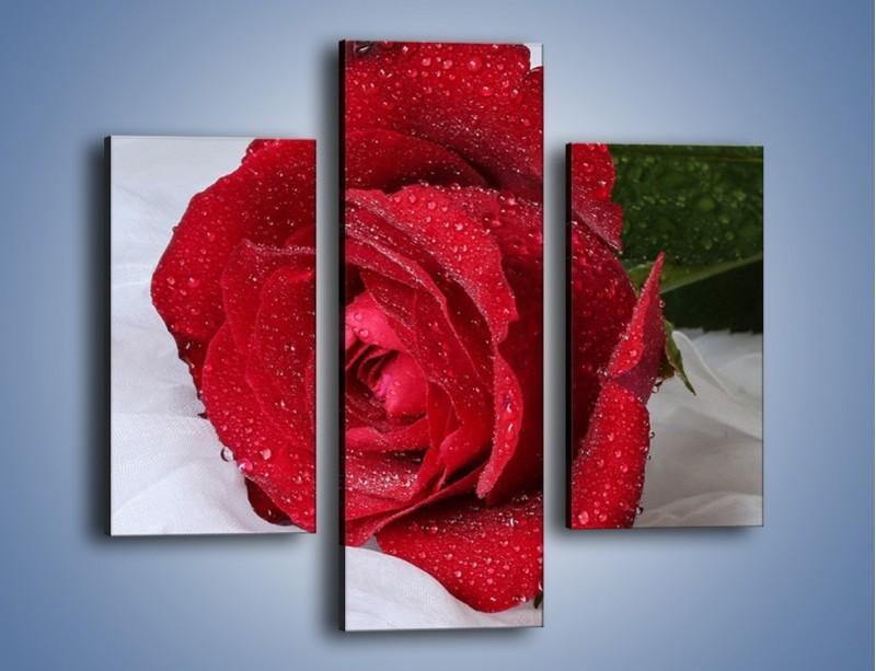 Obraz na płótnie – Bordowa róża na białej pościeli – trzyczęściowy K1023W3
