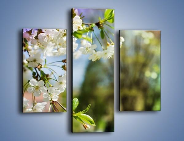 Obraz na płótnie – Jabłoń w parku – trzyczęściowy K1026W3