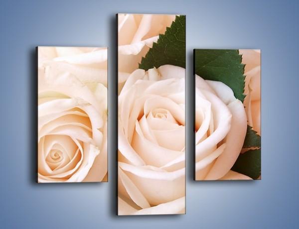Obraz na płótnie – Liść wśród bezowych róż – trzyczęściowy K104W3