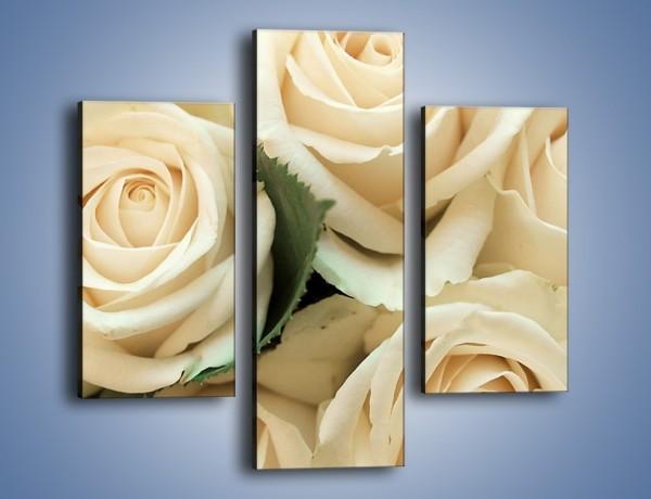 Obraz na płótnie – Głowy śmietanowych róż – trzyczęściowy K105W3
