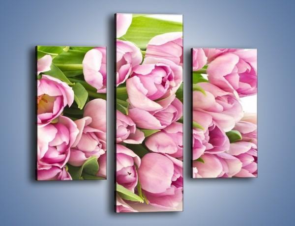 Obraz na płótnie – Ścięte tulipany w bieli – trzyczęściowy K110W3
