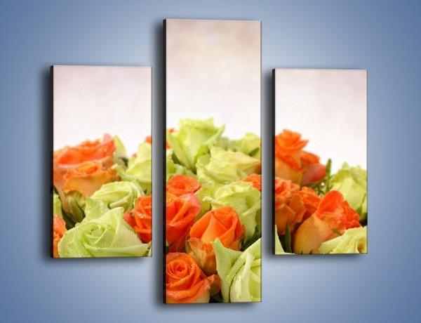 Obraz na płótnie – Dwa kolory w róży – trzyczęściowy K132W3