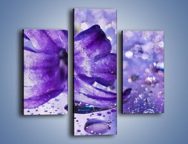Obraz na płótnie – Fioletowy kwiat wśród kropli – trzyczęściowy K143W3