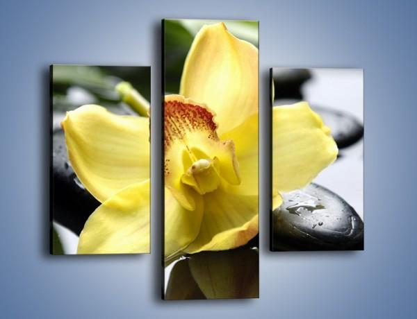 Obraz na płótnie – Żółty kwiat na mokrych kamieniach – trzyczęściowy K155W3