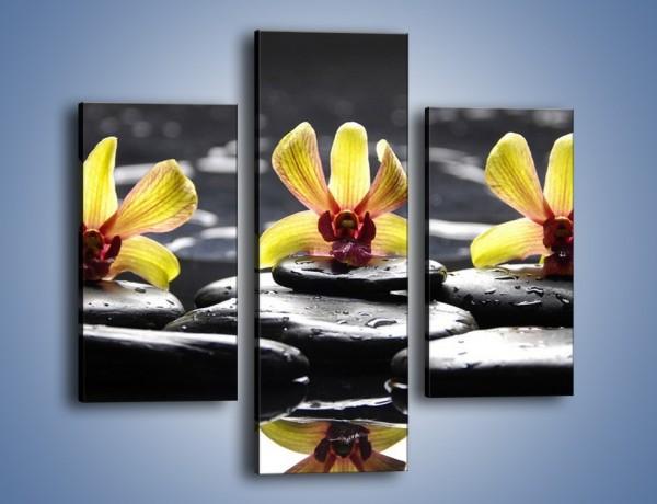 Obraz na płótnie – Storczykowe trio – trzyczęściowy K159W3