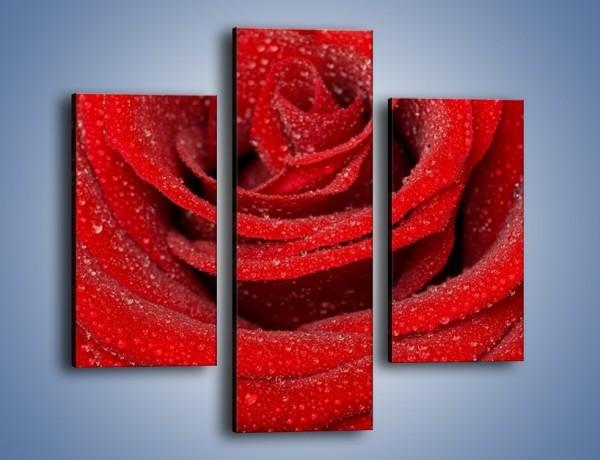 Obraz na płótnie – Czerwona moc w róży – trzyczęściowy K171W3