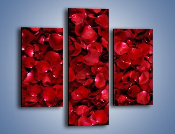 Obraz na płótnie – Dywan usłany płatkami róż – trzyczęściowy K175W3