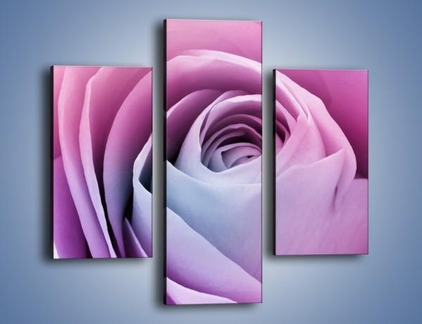 Obraz na płótnie – Pączek róży o poranku – trzyczęściowy K178W3