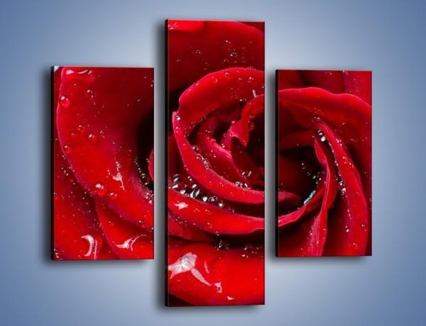 Obraz na płótnie – Kwiat pełen miłości – trzyczęściowy K179W3