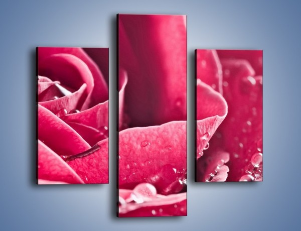 Obraz na płótnie – Różane krople – trzyczęściowy K194W3