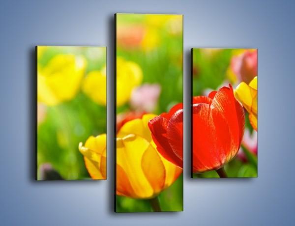 Obraz na płótnie – Wiosenne piękno w tulipanach – trzyczęściowy K213W3