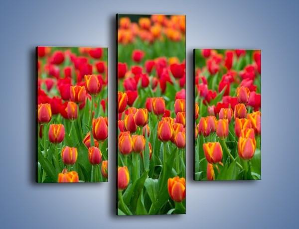 Obraz na płótnie – Tulipanowa rozkosz dla oka – trzyczęściowy K216W3