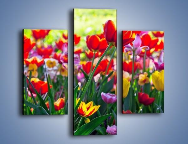 Obraz na płótnie – Odpoczynek wśród tulipanów – trzyczęściowy K218W3