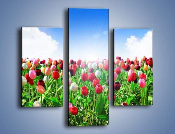 Obraz na płótnie – Droga do nieba z tulipanami – trzyczęściowy K219W3