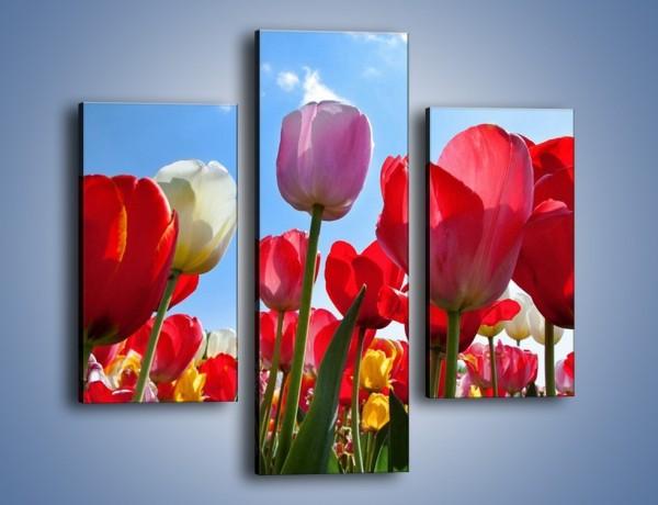 Obraz na płótnie – Kolorowy zawrót głowy z tulipanami – trzyczęściowy K221W3