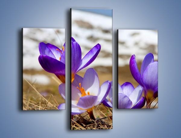 Obraz na płótnie – Zapowiedź wiosny w przebiśniegu – trzyczęściowy K225W3