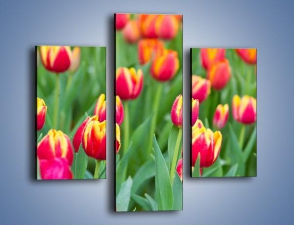 Obraz na płótnie – Spacer wśród czerwonych tulipanów – trzyczęściowy K231W3