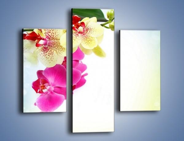 Obraz na płótnie – Krajobraz z kwiatami – trzyczęściowy K250W3