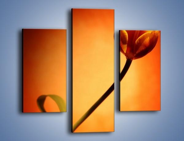 Obraz na płótnie – Zamyślony tulipan – trzyczęściowy K256W3