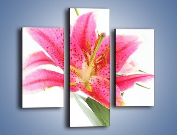 Obraz na płótnie – Rzut na lilie – trzyczęściowy K257W3