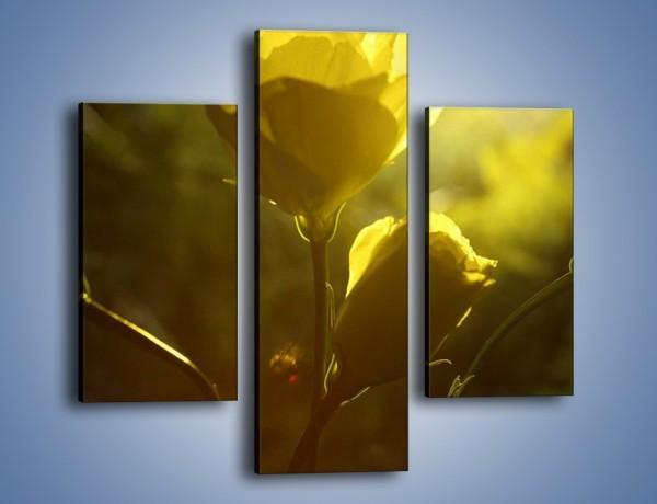 Obraz na płótnie – Dzika róża w oddali – trzyczęściowy K258W3