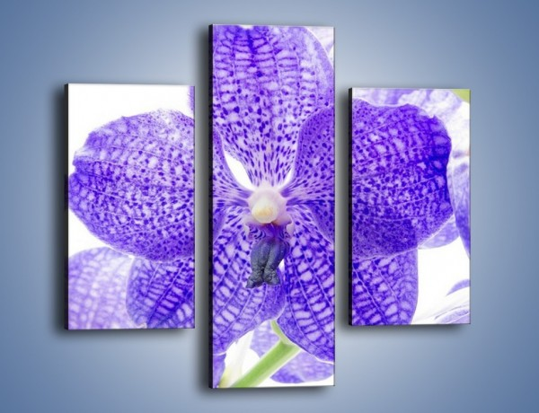 Obraz na płótnie – Jasny fiolet rządzi w kwiatach – trzyczęściowy K259W3