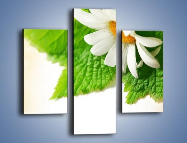 Obraz na płótnie – Tło z jednym kwiatem – trzyczęściowy K280W3