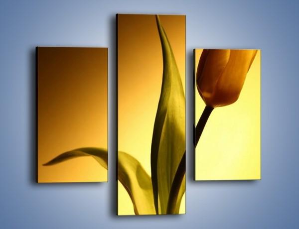 Obraz na płótnie – Tulipan w samotności – trzyczęściowy K286W3