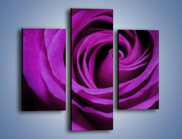Obraz na płótnie – Tajemniczy różany fiolet – trzyczęściowy K313W3