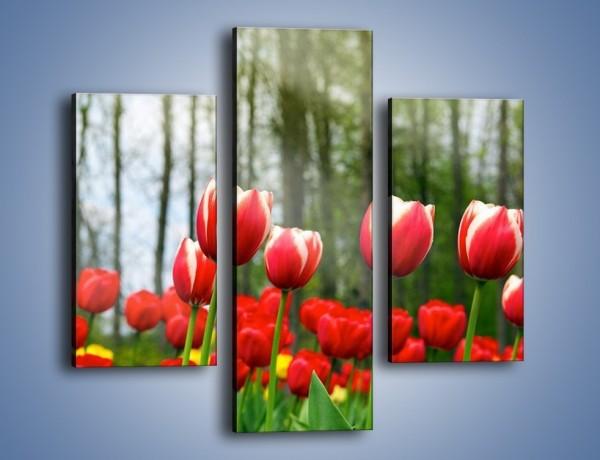 Obraz na płótnie – Leśna polana pełna tulipanów – trzyczęściowy K319W3