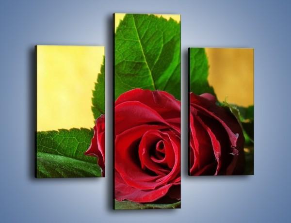 Obraz na płótnie – Róża w domowym zaciszu – trzyczęściowy K339W3