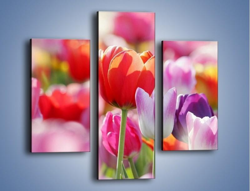 Obraz na płótnie – Boso przez tulipany – trzyczęściowy K344W3