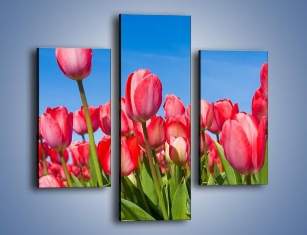 Obraz na płótnie – Tulipany czerwone jak nigdy – trzyczęściowy K345W3