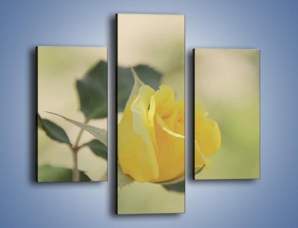 Obraz na płótnie – Cytryna odbita w róży – trzyczęściowy K347W3