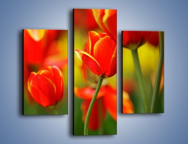 Obraz na płótnie – Wyraźny charakter tulipanów – trzyczęściowy K349W3