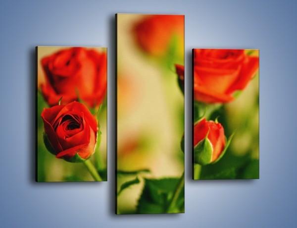 Obraz na płótnie – Po prostu róża – trzyczęściowy K358W3
