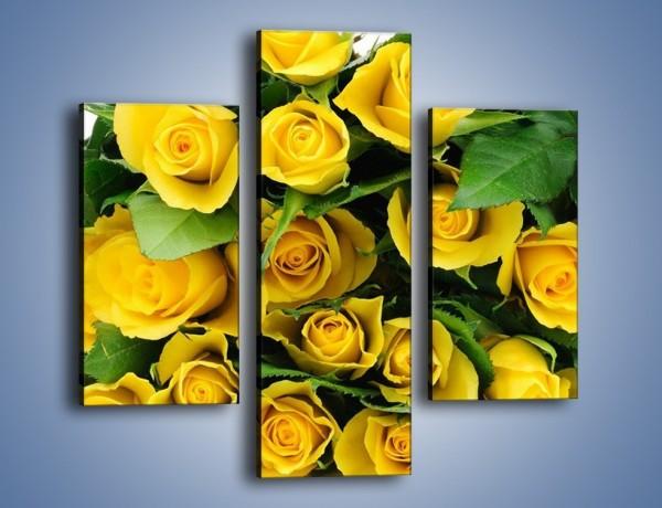 Obraz na płótnie – Wiosenny uśmiech w różach – trzyczęściowy K379W3